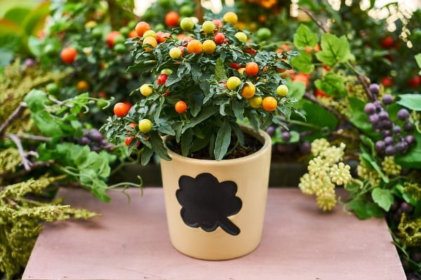 How To Plant In Containers.