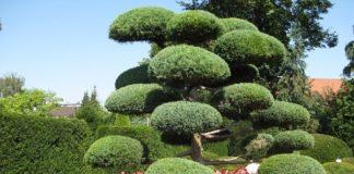 Japanese Garden Design Principles   Agri Farming