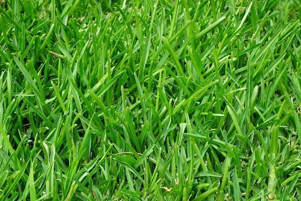 Grass weeds.