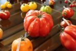 How to grow Heirloom Tomatoes from seeds.