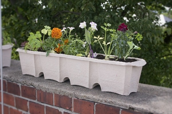 Growing Vegetables along with Flowers in Balcony box.