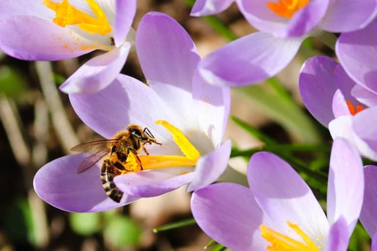 Importance of Bee Pollination.