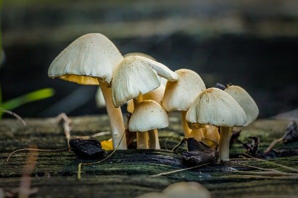 Mushroom Cultivation.