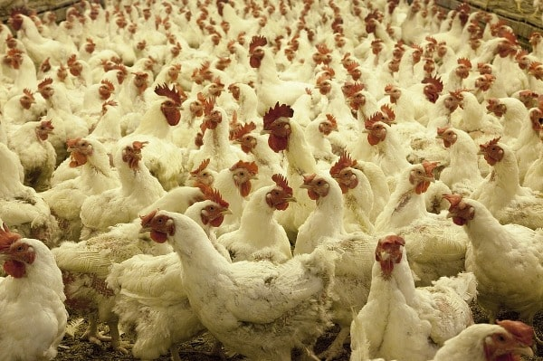 Top 10 Banks for Poultry Farm Loan.