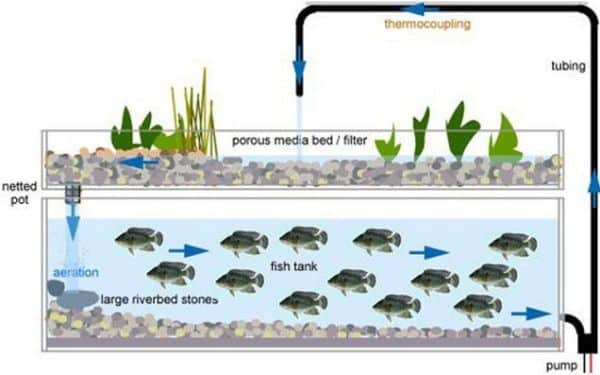 Aquaponics Training Centers In India   Agri Farming