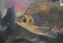 Biofloc Fish Farming.