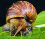 Snail Farming Business Plan.