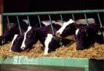 Dairy Animal Feed.