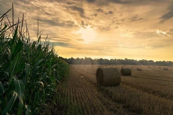 Principles of Rural Development.