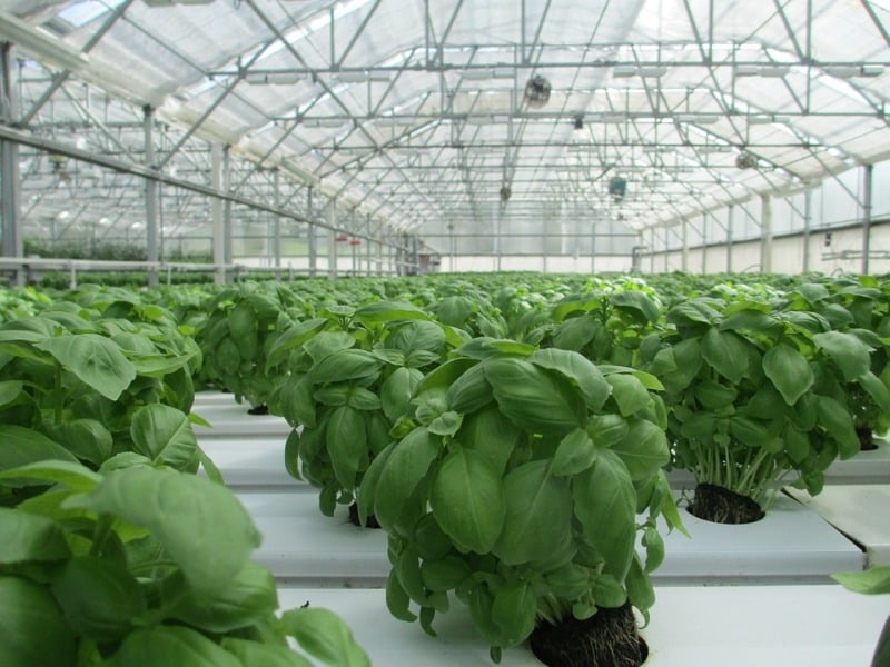 Organic Greenhouse Farming.