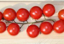 Cherry Tomato Farming.