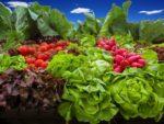 Vegetable Farming In India.