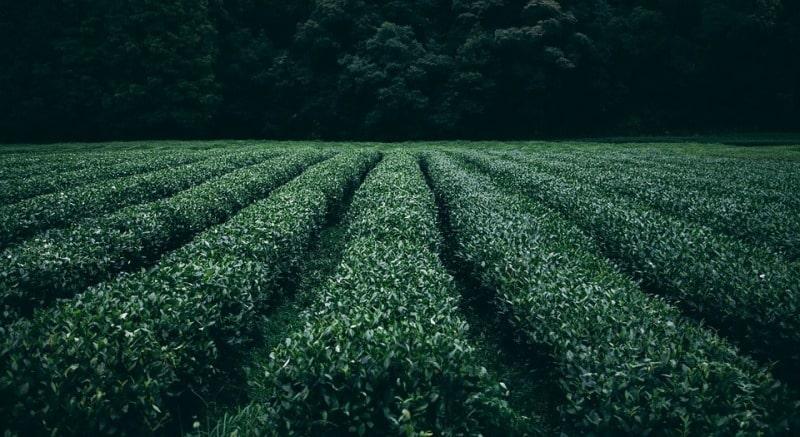 No-Tillage Agriculture.