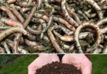 Vermicompost Production Cost, Income, Project Report.