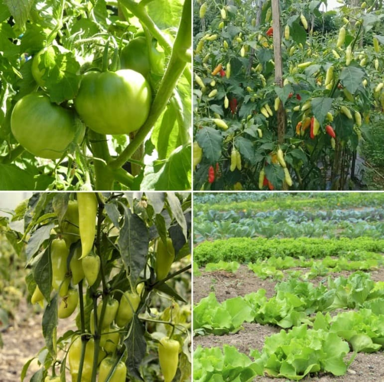 Organic Vegetable Farming Project Report.
