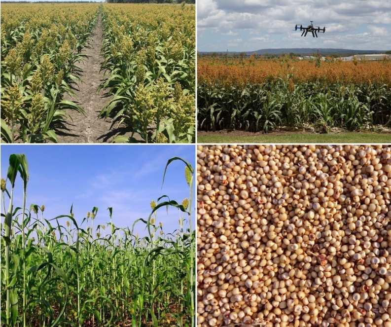 Sorghum Farming Project Report.