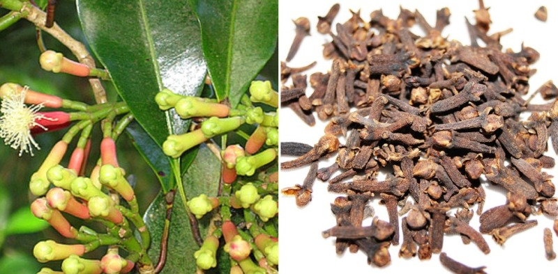 Clove Cultivation Income.