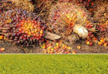 Oilseeds Farming in India.