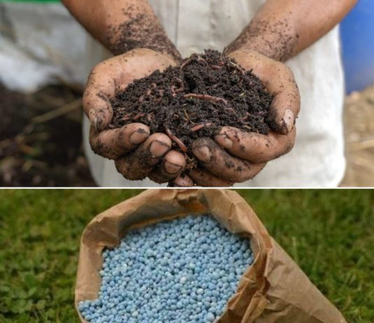 Difference Between Manure and Fertilizers.