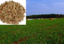 Horse Gram Cultivation Income, Yield.
