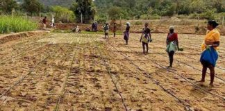Micro-irrigation Project in Telangana.