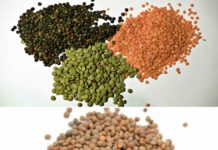 Lentil Cultivation Income, Profit, Project Report.