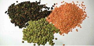Lentil Cultivation Income, Profit, Project Report.
