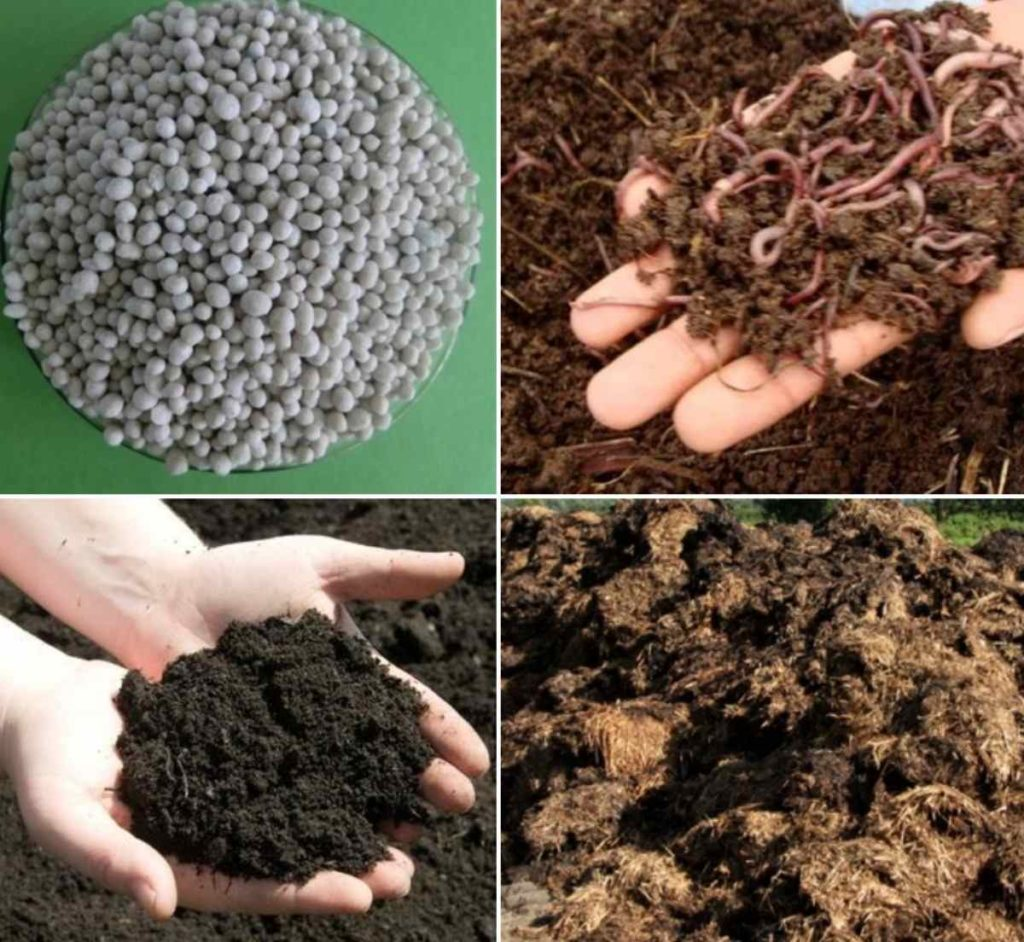 Types of Manure.