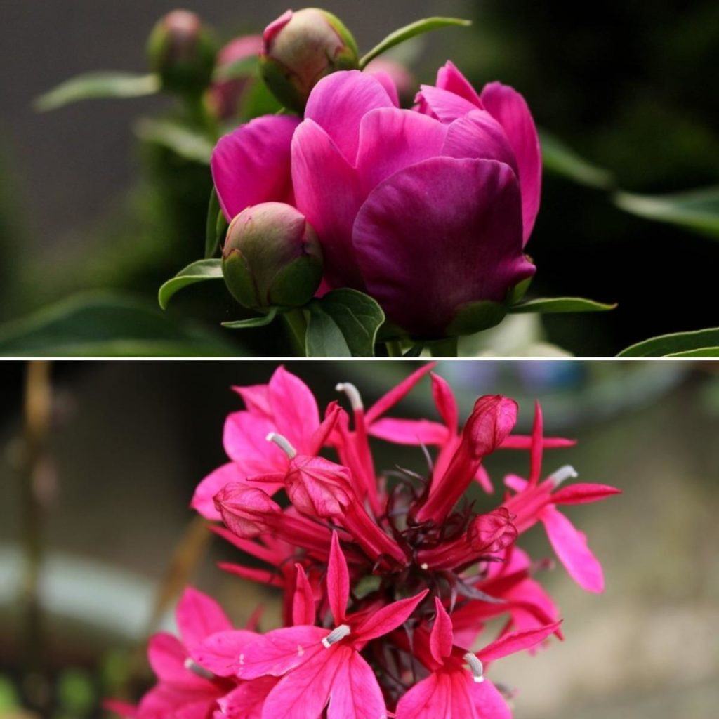 Difference Between Annual and Perennial.