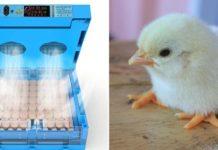 Poultry Incubators.