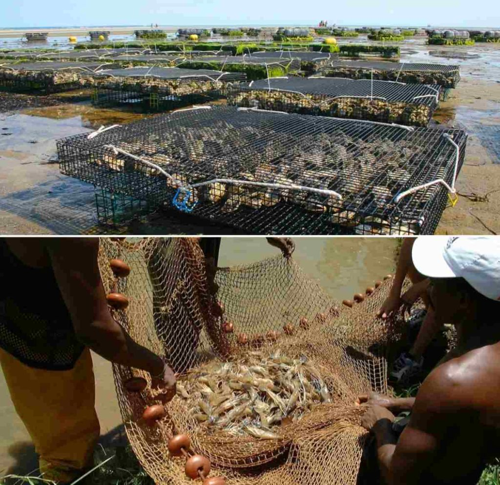 Scope of Aquaculture in India.