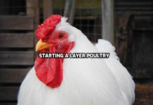 Egg Poultry Farming.