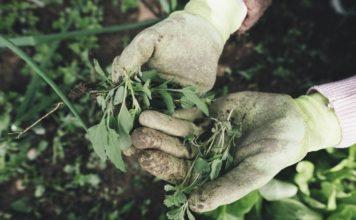 Vegetable Weed Control Methods.