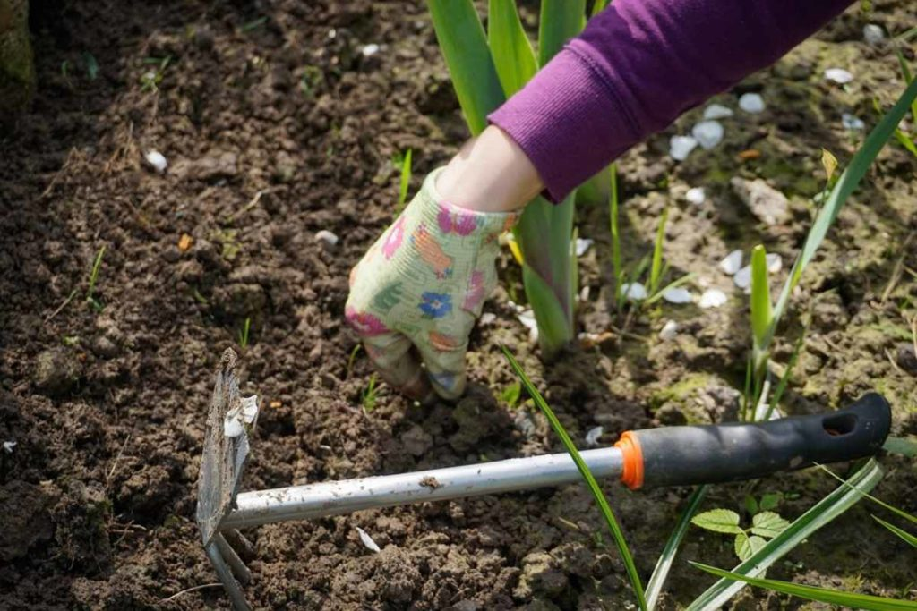 Critical Period of Weed Removal in Vegetables.