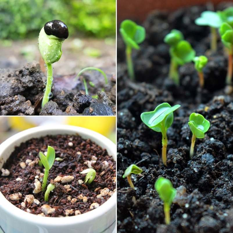 A Guide to Seed Germination, Seed Rate, Seed Treatment.