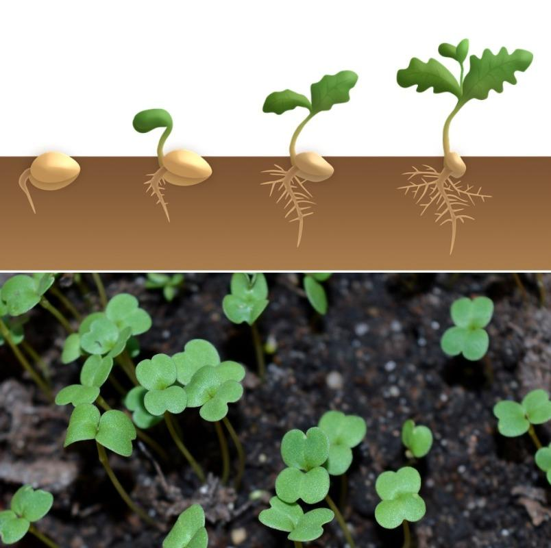 Seed Germination Requirements.