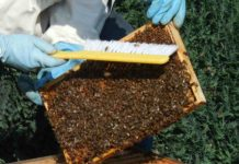 Loans and Subsidies on Beekeeping in India.
