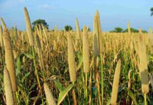 Dryland Farming in India.