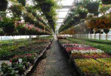 Plant Nursery Project Report.