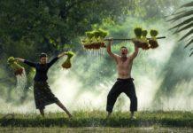 Cooperative Farming Guide.