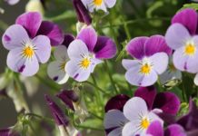 How to Get an improved Spring Flower Garden.