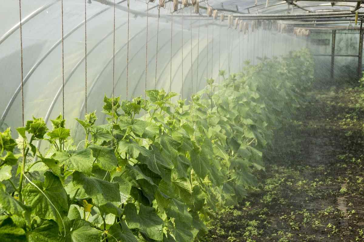 Limitations of protected cultivation of vegetables.