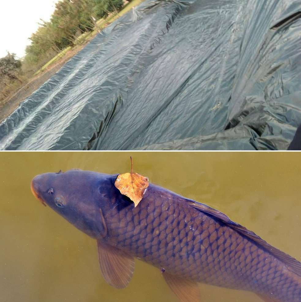 Types Of Fish Ponds For Fish Farming A Full Guide Agri Farming