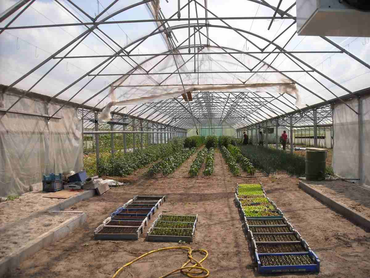Questions about Vegetable Farming in Greenhouse.