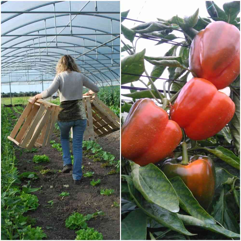 Best time to Grow Vegetables in the Greenhouse.