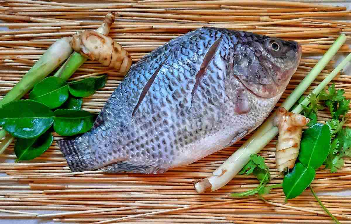 Tilapia Fish Farming In BioFloc – A Beginners Guide