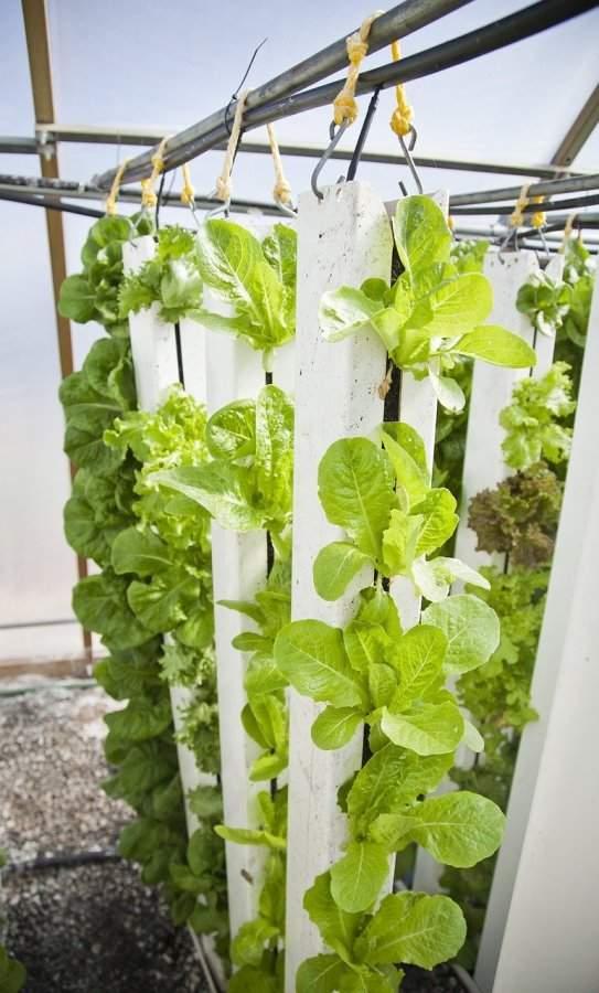 Advantage of vertical farming